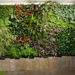 Mur Végétal intérieur Bordeaux