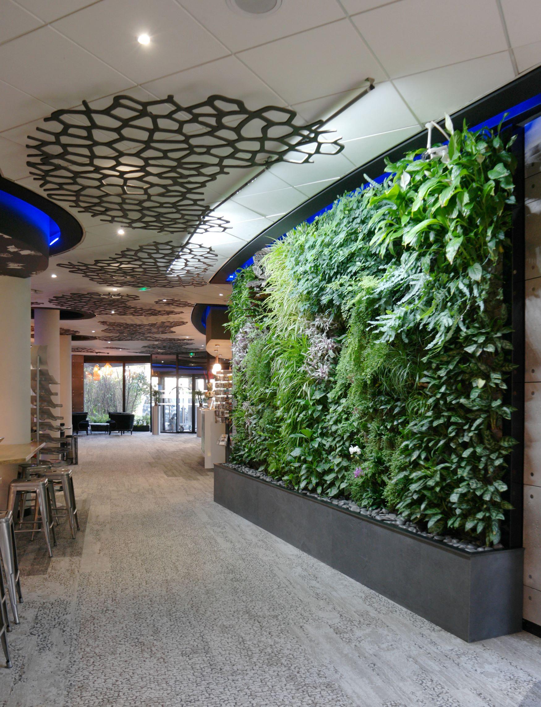mur végétal intérieur et plantes d'intérieur