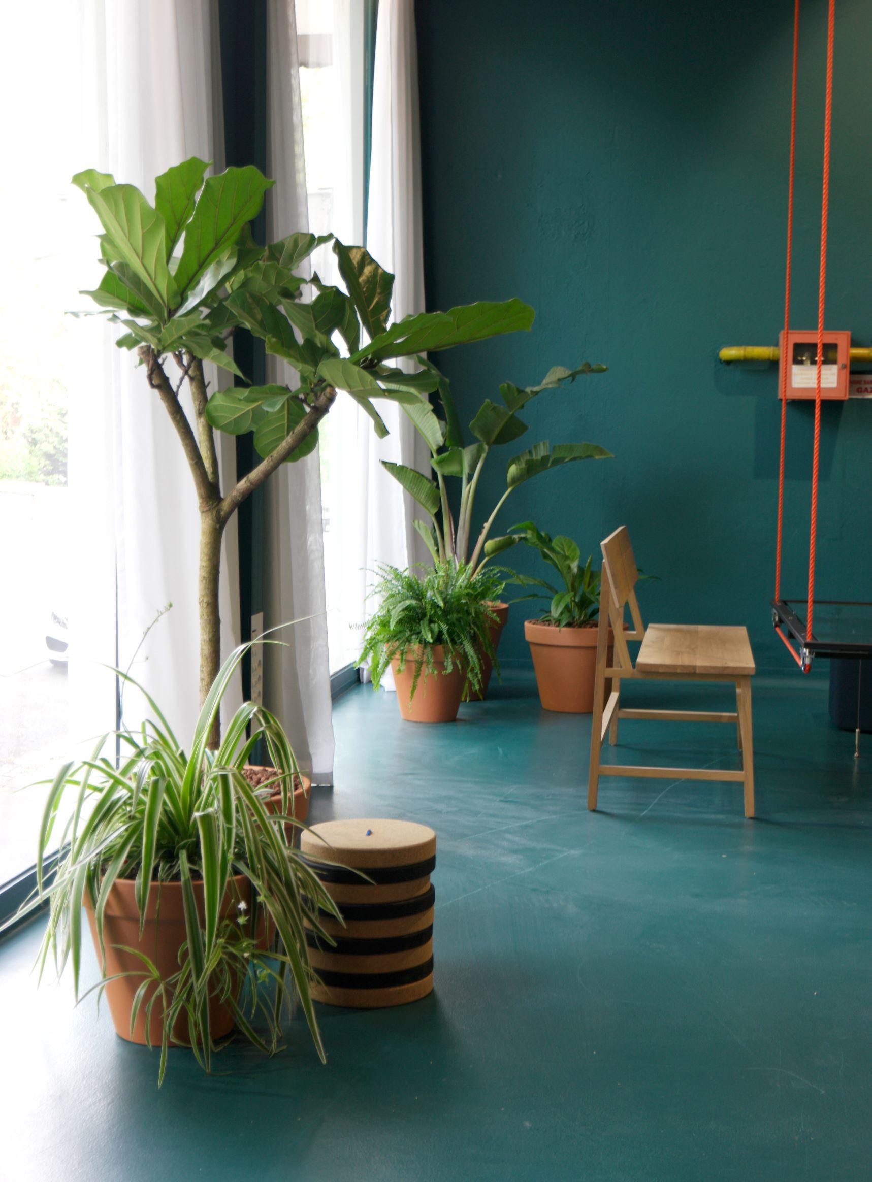 paysagisme d'intérieur et design végétal
