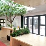 arbre intérieur design végétal