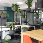 green office design végétal et plantes suspendueses