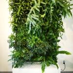 Mur végétal autoportant inflor